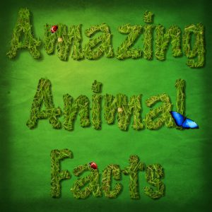 amazing facts about animals in hindi best interesting general knowledge question answers