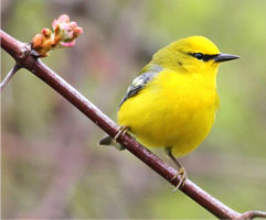 best Amazing facts about birds in hindi